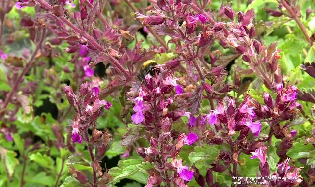 Zasady ogrodu przyjaznego pszczołom
